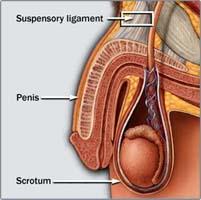 Penis Enlargement Cost 38